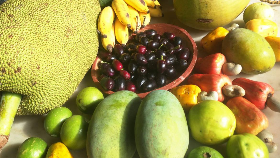 Fruits of the Cajueiro Homestead