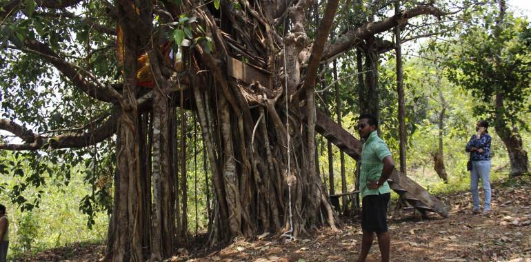 Of Camping and Treehouses at The Cajueiro Homestead